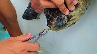 Download Sea Turtle Rescue. Say NO to plastic waste Video