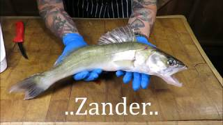 Download How To Prepare And Cook A Zander. Doom Bar Battered Zander. #SRP Video