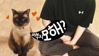 Download 집사가 뭘 하든 졸졸 따라다니는 샴 고양이 | 김메주와고양이들 Video