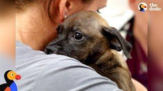 Download Woman Rescues Puppy From Puerto Rico After Hurricane | The Dodo Video