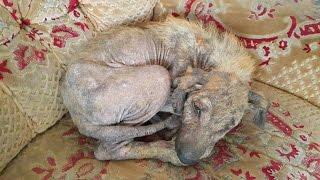 Download قصة علاج الكلب المسكين كامله مع جمال العمواسي Video