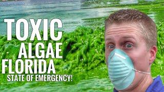 Download Florida State Of Emergency: Toxic Blue/Green Algae? Video