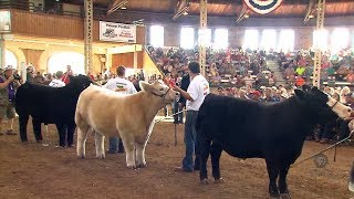 Download 4-H Grand Champion Steer Video