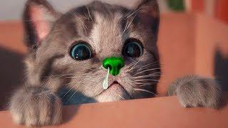 Download Little Kitten My Favorite Cat Pet Care - Play Cute Kitten Video Games For Children Video