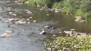 Download Таежный поход / Мост в тайге / Река Рудиковка Мост. Video
