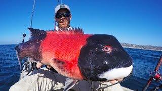 Download Kayak Fishing for California Sheephead   #FieldTrips Ep 3 Video
