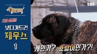 Download 세상에 나쁜 개는 없다 - 달콤 살벌한 보디가드견 제우스 #001 Video