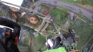 Download Tree Topping Fail Video