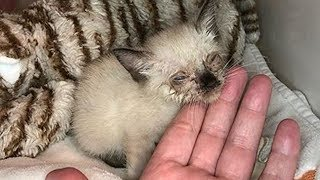 Download Amazing Transformation of Little Stray Cat Was Malnourished With Nasty Eye Infection Video