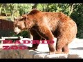 Download Madrid Zoo Video