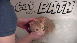 Download CAT takes first BATH - Leo McWhiskers Video