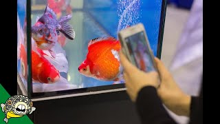 Download Hong Kong CRAZY Goldfish Market Video
