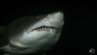 Download Cannibalistic Baby Sharks | Top Ten Sharkdown Video