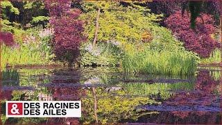 Download Le jardin de Monet à Giverny Video