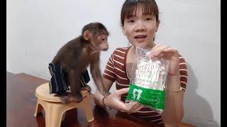 Download Monkey Doo Eats Mushrooms Video