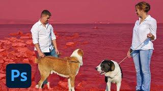 Download Photoshop Sneak Peek: Select Subject in Photoshop CC Video