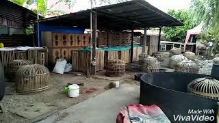 Download Koleksi ayam laga AGUS padang Video