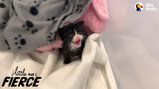Download Litter Of Kittens Found Crying In Trash Bag | The Dodo Little But Fierce Video