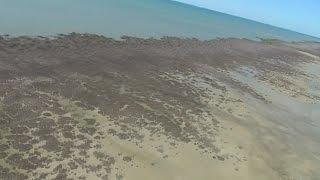 Download Мангровый лес в Австралии погиб за месяц (новости) Video