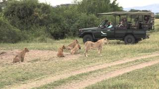 Download The Serengeti Lion Safari Film Trip - Photos of Africa Video