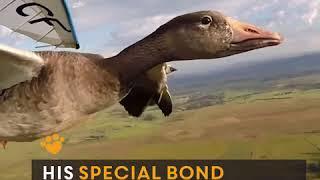 Download полет с птицами Video