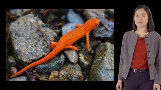 Download Elly Tanaka (IMP and VBC) 1: Axolotl Limb Regeneration Video