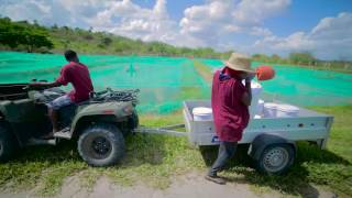 Download Ruvu Fish Farm Video