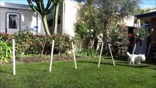 Download Teach Your Dog the Weave Poles | Zac & Lucy's Agility Video