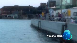 Download Mackerel Breaking at Youghal Harbour 2014 Video