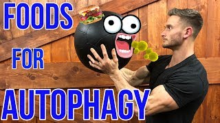 Download How to Boost Autophagy without Fasting | What is Autophagy | Foods for Autophagy - Thomas DeLauer Video