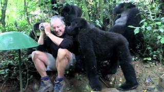 Download Touched by a Wild Mountain Gorilla (short) Video