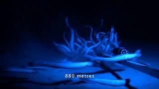 Download Living on the Ocean Floor Video