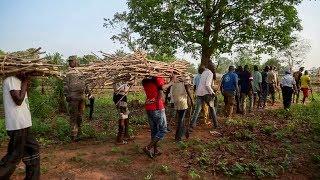 Download Berberati : des détenus cultivent un champ Video