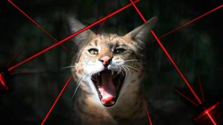 Download BIG CATS vs Laser Pointers! Video