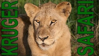 Download Safari in the Kruger National Park South Africa February 2018 Video