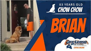 Download 3 y/o Chow Chow (Brian) | Best Dog Trainers In Richmond | Richmond Virginia Dog Training Video