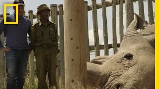 Download The Last Northern White Rhinos | Years of Living Dangerously Video