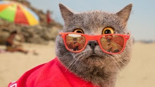 Download World's First Cat Lifeguard Video