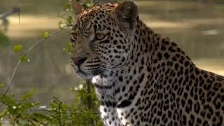 Download Pt 2 Safari Live's Sunrise Safari Drive at 7:30 AM on Jan 19, 2018 ( Nkuhuma Pride & Hosana ) Video