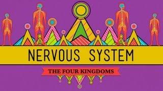 Download The Nervous System - CrashCourse Biology #26 Video