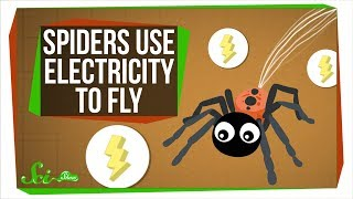 Download Turns Out, Spiders Use Electricity to Fly Video