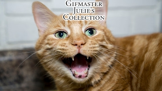 Download Gifmaster Julie's Collection! Video