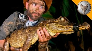 Download DANGEROUS Caiman Catch! Video