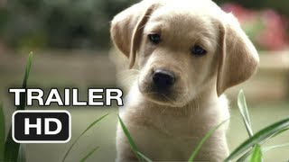 Download Quill The Life of a Guide Dog Official Trailer #1 (2012) HD Movie Video