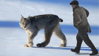 Download 10 Most Beautiful Rare Wild Cats on Planet Earth Video