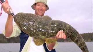 Download REEL IT IN - ″ How To Catch Big Dusky Flathead″ PART 1 Video
