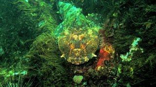 Download Diving @ Glass Beach. Fort Bragg, California.USA Video