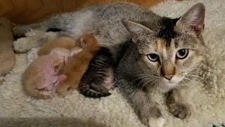 Download 子連れの野良猫を発見!可愛すぎる子猫たちに…(*'ω'*) Video