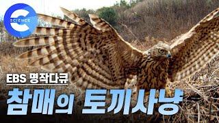 Download 참매의 토끼사냥 (Rabbit hunting) Video