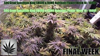 Download SOG Grow Spectrum King SK600 & REMO Nutrients Flower Week 10 1080P Video